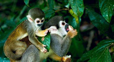 Empfohlene Individualreise, Rundreise: Naturparadies Brasilien – Wasserfälle, Regenwald und Amazonas