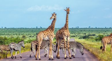 Empfohlene Individualreise, Rundreise: Selbstfahrer-Reise zu Südafrikas West Kap