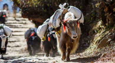 Empfohlene Individualreise, Rundreise: Highlights der Himalayas: Nepal, Bhutan und Tibet