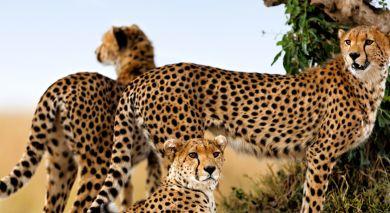 Empfohlene Individualreise, Rundreise: Kenia: Wandersafari & Strand