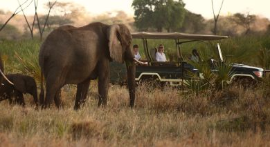 Example private tour: Wings over Kenya: Safari and Beach