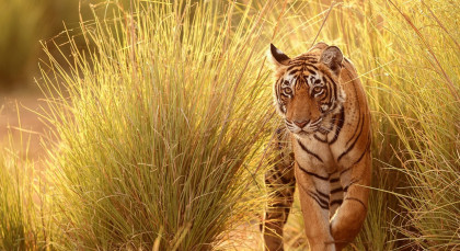 Destination Pench in Central & West India