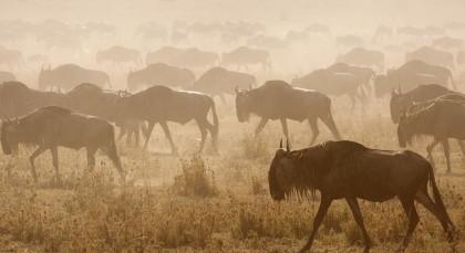 Zentrale Serengeti in Tansania