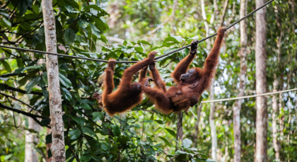 Destination Bukit Lawang in Indonesia