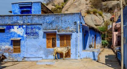 Destination Narlai in North India
