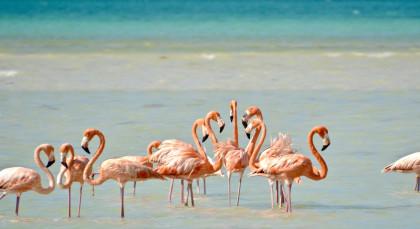 Destination Isla Holbox in Mexico
