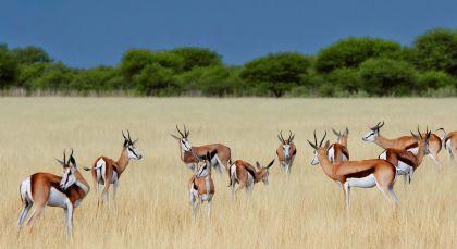 Destination Central Kalahari in Botswana