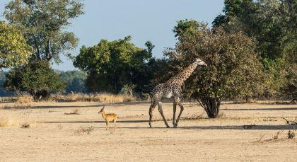 Reiseziel South Luangwa in Sambia