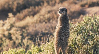 Destination Little Karoo in South Africa