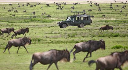 Destination Serengeti (Northern) in Tanzania