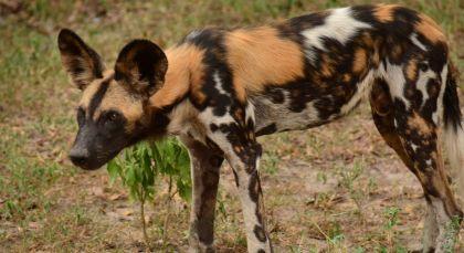 Destination Selous in Tanzania