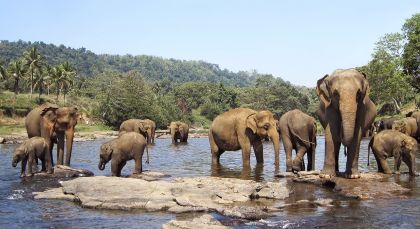 Destination Nagarhole in South India
