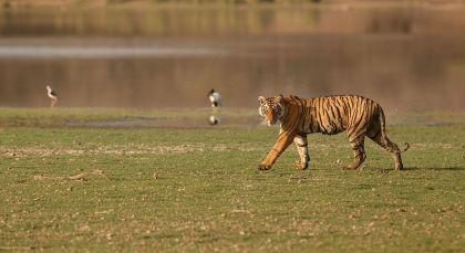 Bandhavgarh Nord de l'Inde