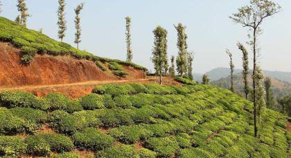 Reiseziel Wayanad in Südindien