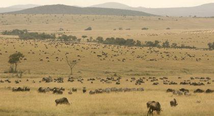 Viktoriasee in Kenia