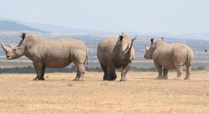 Laikipia – Community Reserves in Kenia