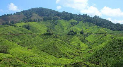 Destination Cameron Highlands in Malaysia
