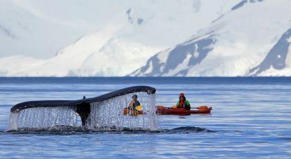 Destination Antarctica in