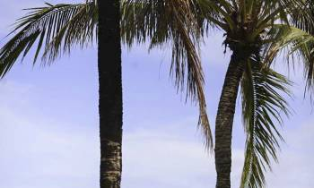 a person standing next to a palm tree