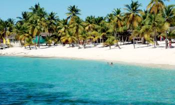a group of palm trees on a beach near a body of water