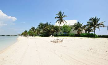 a sandy beach with palm trees