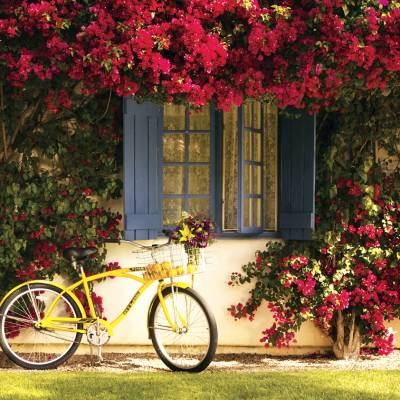 a bicycle parked in front of a yellow flower