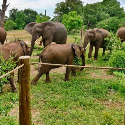 Elephant encounters
