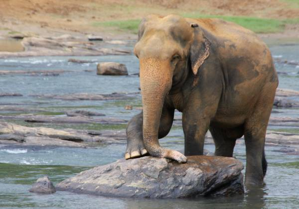 a baby elephant standing next to a body of water