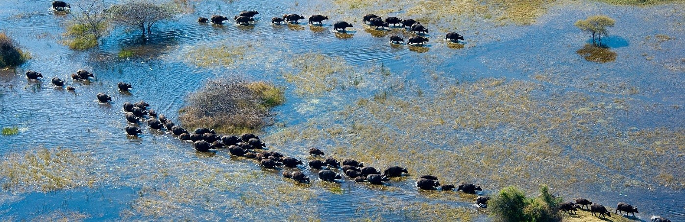 Okavango Delta - Wilderness Safaris Botswana Vacation