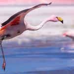 Enchanting Travels Bolivia Tours Flamingo