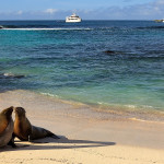 Seals on a beach on the island of Espanola in Galapagos Ecuador Tours Enchanting Travels