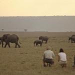 Top tips for safari
