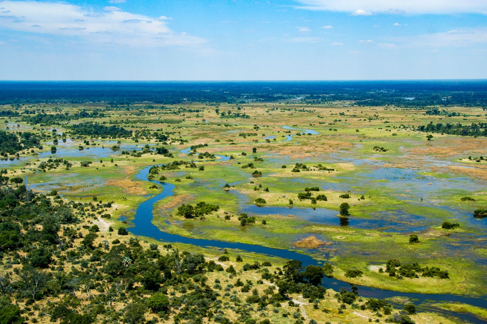 Okavango Delta in the green season