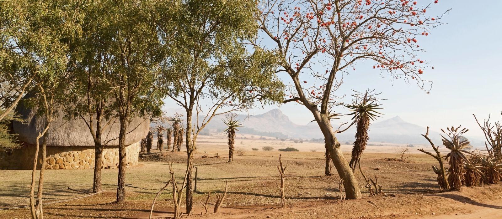 ESWATINI (SWASILAND) Naturschutzgebiet Berg und Baum