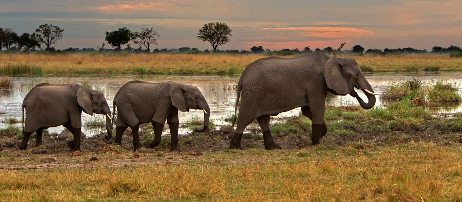 Drei Elefanten gehen Fluss entlang