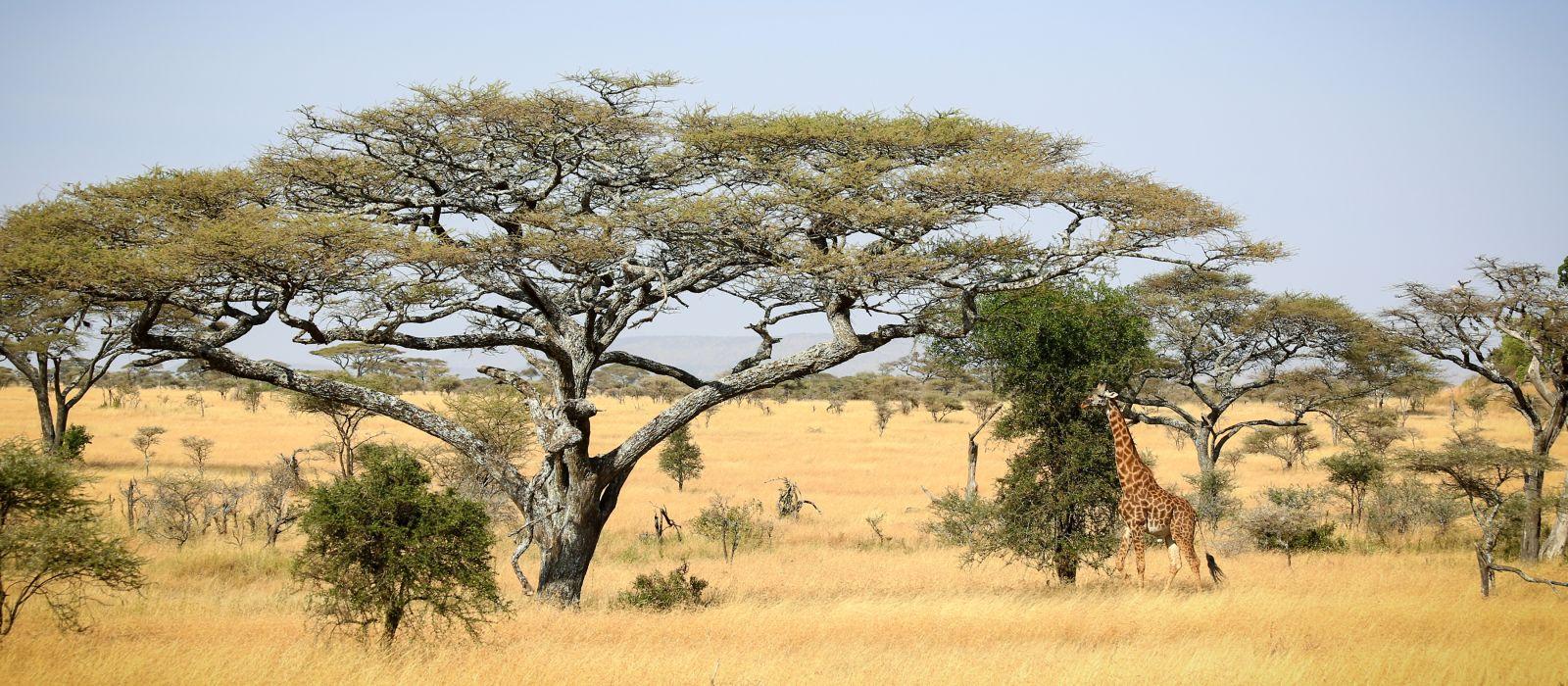 Serengeti Landschaft, Tansania, Afrika