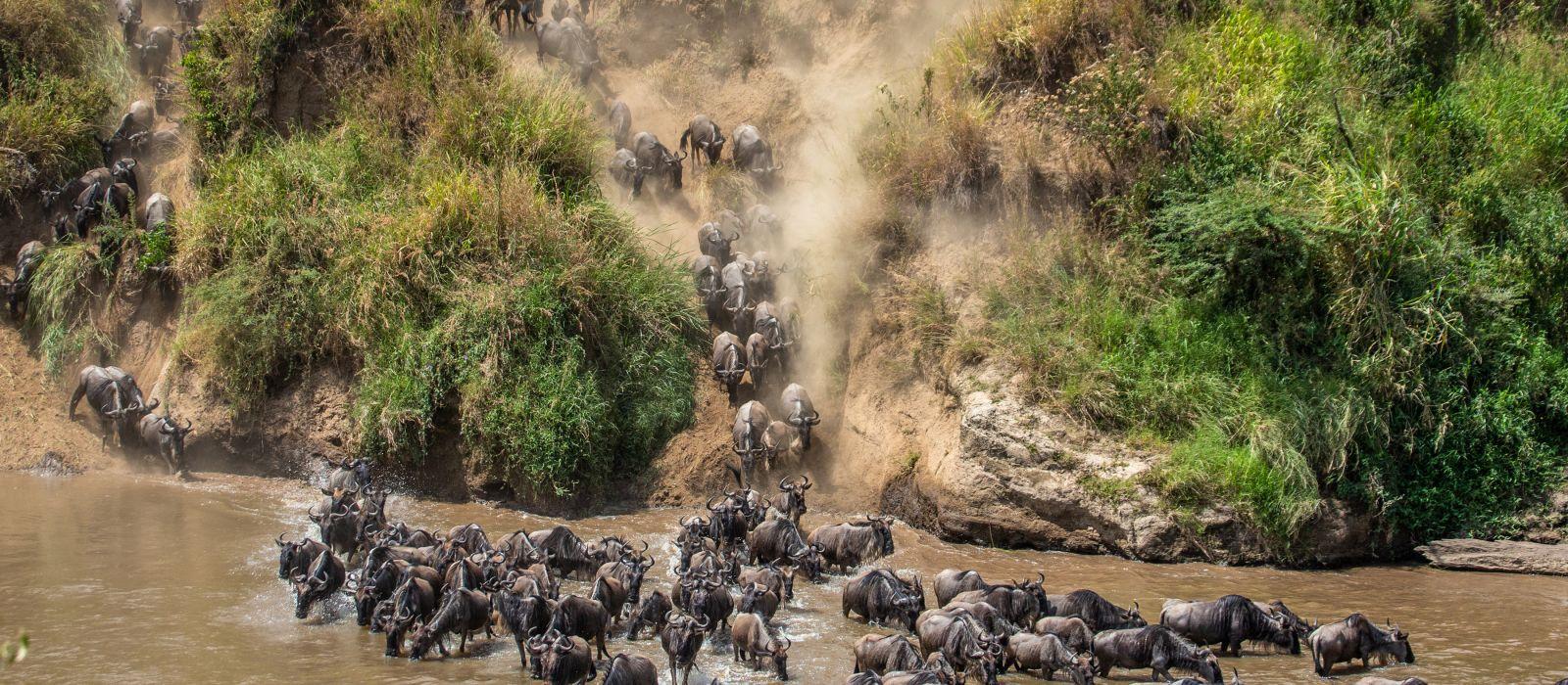 Die Gnus überqueren den Mara-Fluss, Große Wanderung. Kenia. Tansania. Maasai Mara-Nationalpark
