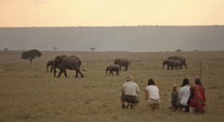 Top tips for safari