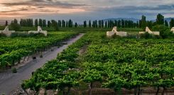 Cavas Wine Lodge Mendoza Argentina Tour