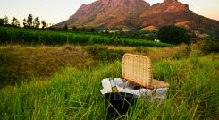 Wine lands of the Cape South Africa Tour