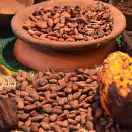 Chocolate beans, Ecuador
