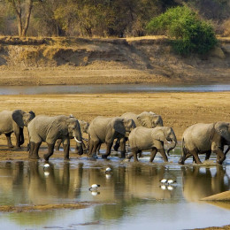 wildlife safari in Zambia