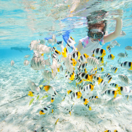 Snorkeling in French Polynesia - Find the best time to visit French Polynesia