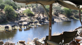 Watching an elephant herd at Meno a Kwena Tented Camp in Kalahari Salt Pans, Botswana