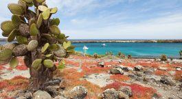 Farbenfrohe Inselwelt: Isla Santa Cruz, Galapagos