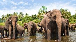 Sri Lanka Safari im Yala Nationalpark: Elefentanherde