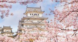 Enchanting Travels Japan Tours Himeji castle with sakura cherry blossom festival in Japan