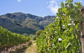 South Africa tours: The winelands are a dream for gourmets