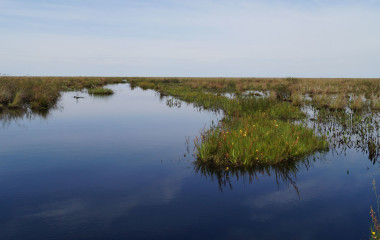 Freshwater marsh, Esteros del Iberá, Argentina, South America