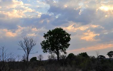 The sunset of Hwange National Park of Zimbabwe